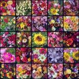 Ένα κολάζ των εικόνων των διαφορετικών λουλουδιών ανθοδεσμών Στοκ Φωτογραφία