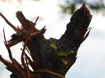 Ένα κολόβωμα δέντρων Στοκ εικόνες με δικαίωμα ελεύθερης χρήσης