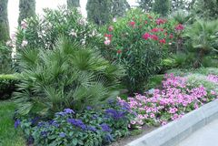Ένα κρεβάτι λουλουδιών με τα μπλε, ρόδινα και πορφυρά λουλούδια Θέλω να πάρω τέτοια ομορφιά στο σπίτι, αλλά αυτό ` s ένας οίκτος  στοκ εικόνες με δικαίωμα ελεύθερης χρήσης