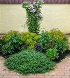 Ένα κρεβάτι λουλουδιών στον κήπο Στοκ φωτογραφίες με δικαίωμα ελεύθερης χρήσης