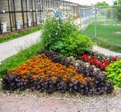 Ένα κρεβάτι λουλουδιών στον κήπο Στοκ Εικόνα
