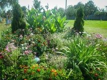 Ένα κρεβάτι λουλουδιών στον κήπο Στοκ Εικόνες