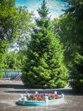 Ένα κρεβάτι λουλουδιών στον κήπο Στοκ εικόνες με δικαίωμα ελεύθερης χρήσης