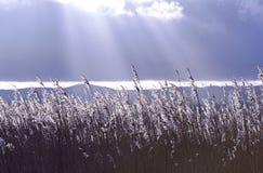 Ένα κρύο και τραγανό ηλιοβασίλεμα φωτίζει ένα κρεβάτι καλάμων με το εξασθενίζοντας φως του μια χειμερινή ημέρα στοκ εικόνες