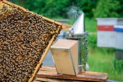 Ένα κυψελωτό σύνολο των μελισσών aphrodisiac Έννοια μελισσοκομίας Στοκ Φωτογραφία