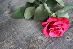Ένα κόκκινο αυξήθηκε ψέματα σε έναν ξύλινο πίνακα Στοκ φωτογραφία με δικαίωμα ελεύθερης χρήσης