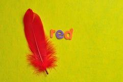Ένα κόκκινο φτερό με το κόκκινο λέξης Στοκ φωτογραφία με δικαίωμα ελεύθερης χρήσης