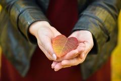 Ένα κόκκινο φύλλο φθινοπώρου βρίσκεται στους φοίνικες του κοριτσιού Φθινόπωρο στοκ εικόνες