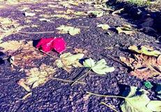 Ένα κόκκινο φύλλο πτώσης Στοκ φωτογραφία με δικαίωμα ελεύθερης χρήσης