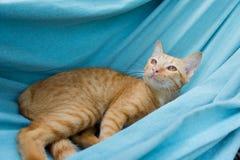 Ένα κόκκινο χαριτωμένο μικρό παιχνίδι γατακιών γατών/γατακιών μωρών στην παραλία αιωρών Στοκ Φωτογραφίες