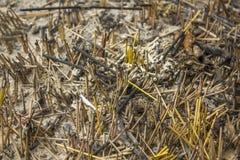 Ένα κύπελλο της τέφρας και υπόλοιπα των μμένων ραβδιών θυμιάματος στοκ φωτογραφίες
