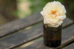 Ένα λευκό αυξήθηκε κλασική ισότητα συμβόλων women's στο ηλέκτρινο μικρό μπουκάλι στο ξύλινο υπόβαθρο επιτραπέζιας φύσης στοκ φωτογραφία με δικαίωμα ελεύθερης χρήσης