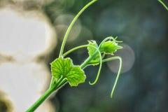 Ένα λουλούδι στοκ εικόνα