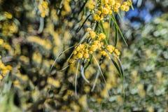 Ένα λουλούδι βλαστάησε ευρέως ανοικτός για να θολώσει έξω το υπόβαθρο στοκ φωτογραφίες με δικαίωμα ελεύθερης χρήσης