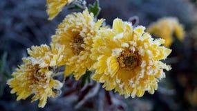 Ένα λουλούδι που θερμαίνει την ψυχή στοκ φωτογραφίες με δικαίωμα ελεύθερης χρήσης