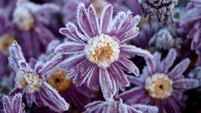 Ένα λουλούδι που θερμαίνει την ψυχή στοκ εικόνες με δικαίωμα ελεύθερης χρήσης