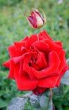 Ένα λουλούδι που θερμαίνει την ψυχή στοκ εικόνες