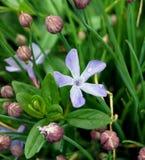 Ένα λουλούδι που θερμαίνει την ψυχή στοκ εικόνα
