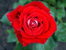 Ένα λουλούδι που θερμαίνει την ψυχή στοκ φωτογραφία με δικαίωμα ελεύθερης χρήσης