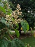 Ένα λουλούδι σε έναν παράδεισο στοκ φωτογραφία με δικαίωμα ελεύθερης χρήσης