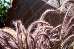 Ένα λουλούδι της χλόης ζιζανίων Στοκ Εικόνες