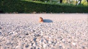 Ένα μήκος σε πόδηα μακρύ καφετί millipede που περπατά στο έδαφος και απλό στη κάμερα απόθεμα βίντεο