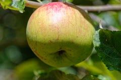 Ένα μήλο ημερησίως κρατά το γιατρό μακριά στοκ φωτογραφία με δικαίωμα ελεύθερης χρήσης