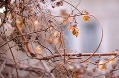 Ένα μαραμένο λουλούδι λυκίσκου σε ένα θολωμένο υπόβαθρο Περίβολος λουλουδιών λυκίσκου Στοκ Εικόνα