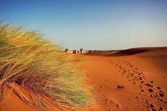 Ένα μαροκινό τοπίο ερήμων με τους αμμόλοφους άμμου, plantati χλόης ερήμων Στοκ φωτογραφία με δικαίωμα ελεύθερης χρήσης