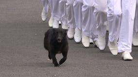 Ένα μαύρο σκυλί που τρέχει παράλληλα με τους βαδίζοντας στρατιώτες κατά τη διάρκεια μιας στρατιωτικής παρέλασης απόθεμα βίντεο