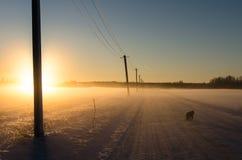 Ένα μαύρο σκυλί που περπατά σε έναν χιονώδη δρόμο ως φωτεινός χρυσός ήλιος αρχίζει να θέτει στοκ φωτογραφία με δικαίωμα ελεύθερης χρήσης