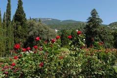 Ένα μεγάλο κρεβάτι λουλουδιών με τα λουλούδια με έναν πολύβλαστο θάμνο των κόκκινων τριαντάφυλλων στο πρώτο πλάνο στα πλαίσια των Στοκ Εικόνες