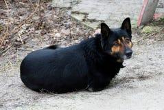 Ένα μεγάλο μαύρο σκυλί βρίσκεται έξω στο προαύλιο Στοκ Εικόνες