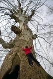 Ένα μεγάλο δέντρο που αναρριχείται στο παιδί στοκ φωτογραφία