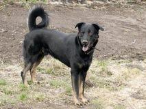 Ένα μεγάλο μαύρο σκυλί στη φύση Στοκ φωτογραφία με δικαίωμα ελεύθερης χρήσης