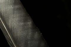 Ένα μεγάλο φτερό κορακιών Μακροεντολή Στοκ Φωτογραφίες