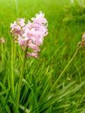 Ένα μικροσκοπικό ιώδες λουλούδι Στοκ Φωτογραφία