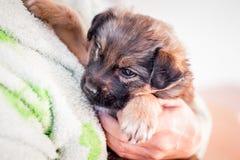 Ένα μικρό, άρρωστο κουτάβι στα όπλα της σε μια γυναίκα Φροντίδα για το animals_ στοκ φωτογραφία