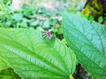 Ένα μικρό έντομο βγάζει φύλλα επάνω Στοκ Φωτογραφία