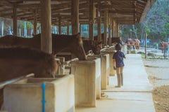 Ένα μικρό αγόρι φροντίζει το άλογό του Στοκ Φωτογραφίες