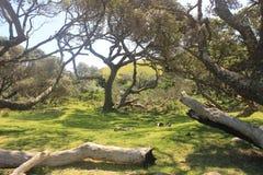 Ένα μικρό αφρικανικό δάσος έξω από την τρύπα στον τοίχο κατά μήκος της άγριας ακτής στη Νότια Αφρική, αφρικανικό υπόβαθρο ταξιδιο στοκ φωτογραφία με δικαίωμα ελεύθερης χρήσης