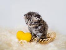 Ένα μικρό γατάκι κάθεται σε ένα καλάθι με μια κίτρινη διακοσμητική καρδιά Στοκ Εικόνες