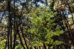 Ένα μικρό δέντρο στην περιοχή ξύλων ενώ το φως ήλιων αφόρησε το Στοκ φωτογραφία με δικαίωμα ελεύθερης χρήσης