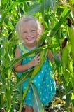Ένα μικρό, εύθυμο κορίτσι μεταξύ του υψηλού, πράσινου καλαμποκιού Στοκ Εικόνες