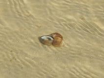 Ένα μικρό θαλάσσιο σαλιγκάρι Στοκ Φωτογραφία