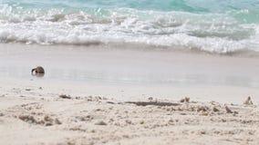 Ένα μικρό καβούρι τρέχει πέρα από την παραλία μακρυά από το νερό απόθεμα βίντεο