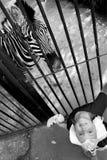 Ένα μικρό κορίτσι και ένα με ραβδώσεις zoo στοκ εικόνα με δικαίωμα ελεύθερης χρήσης