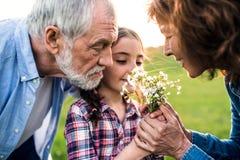 Ένα μικρό κορίτσι με την ανώτερη μυρωδιά παππούδων και γιαγιάδων της ανθίζει έξω στη φύση στοκ εικόνες με δικαίωμα ελεύθερης χρήσης