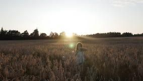 Ένα μικρό κορίτσι σε έναν τομέα σίτου στο φυσώντας σαπούνι ηλιοβασιλέματος βράζει! φιλμ μικρού μήκους