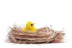 Ένα μικρό κοτόπουλο σε μια φωλιά εκκόλαψε από ένα αυγό Στοκ Εικόνες